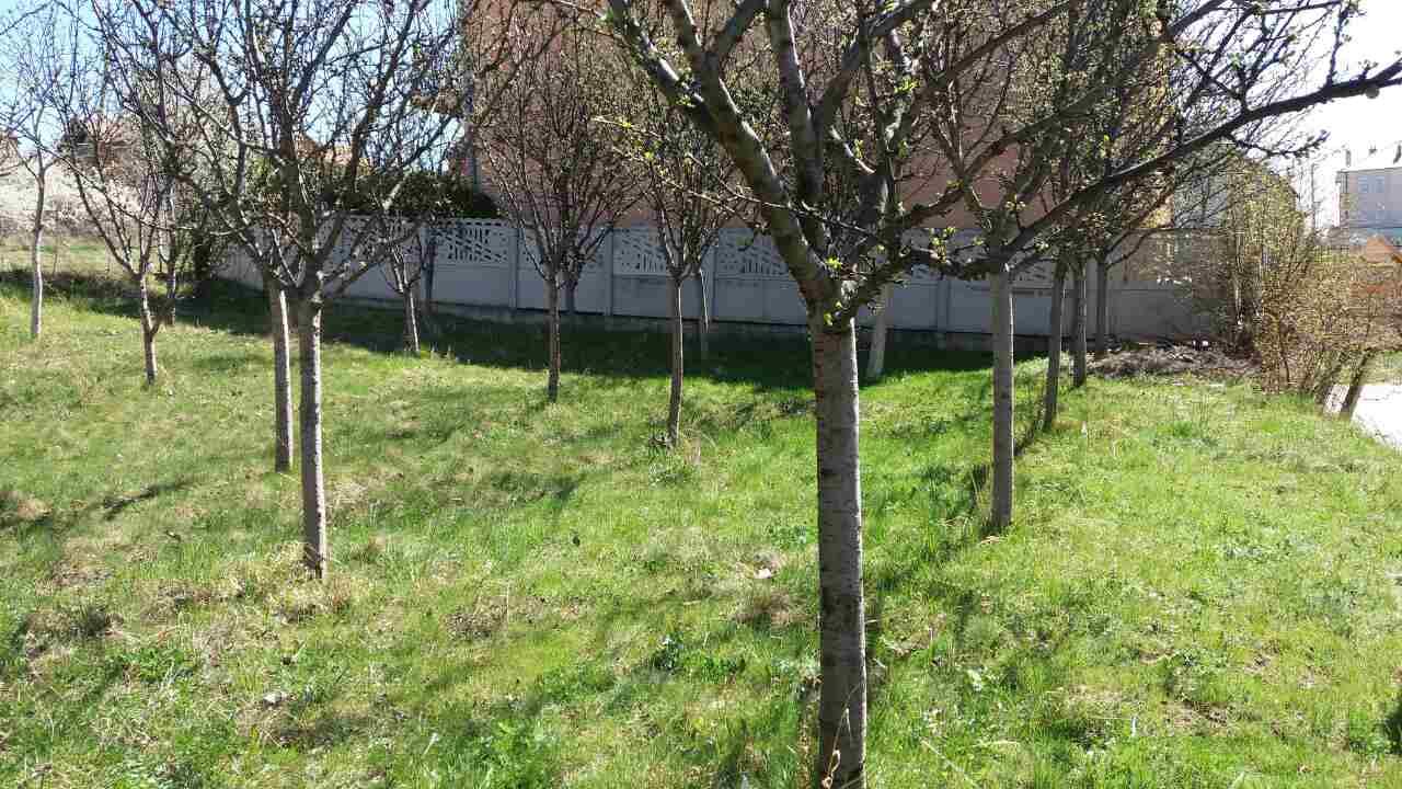 Shitet Toka 3.15 ari në Prishtinë në lagjen Matiqani